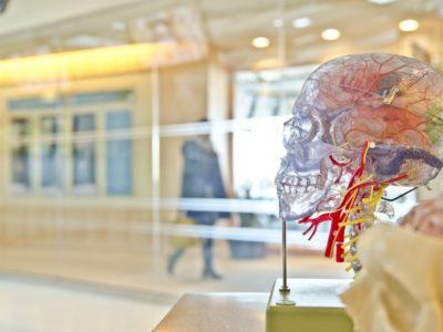 Cerveau : Comment fonctionne notre cerveau ?