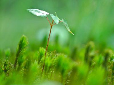 Résilience : L'optimisme face aux épreuves